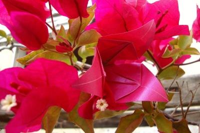 Flor de origami de 3 pétalas